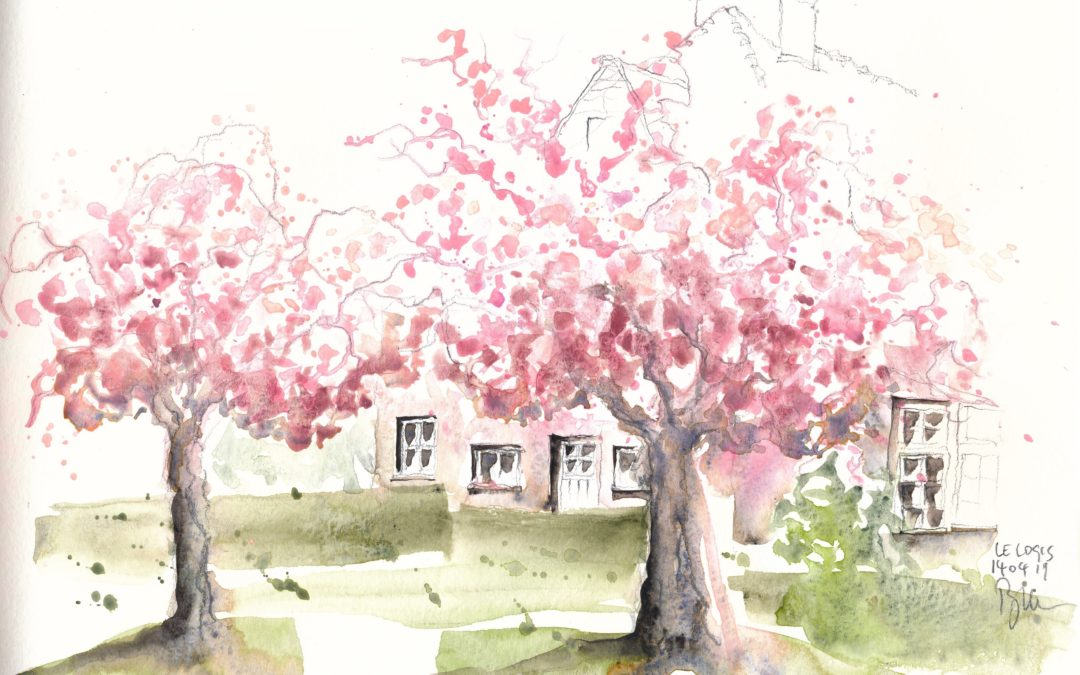 Urbansketching cherry blossoms in full bloom